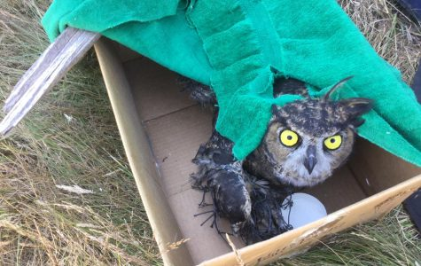 Operation Owl Rescue is a success. Photo by Rick Keller Scholz