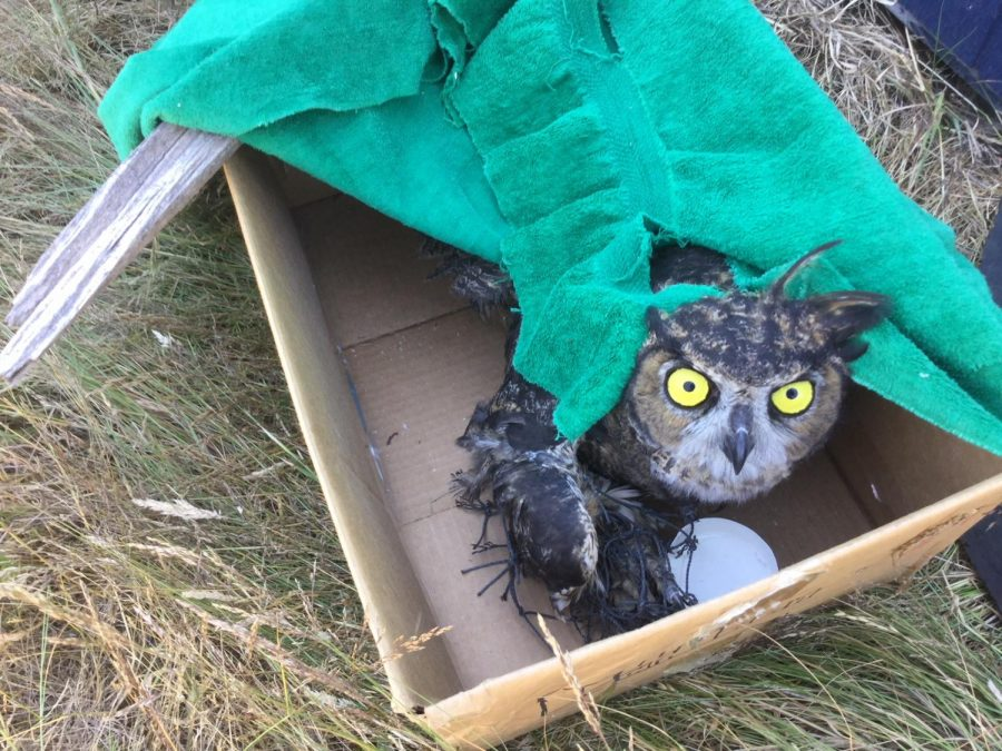 Operation+Owl+Rescue+is+a+success.+Photo+by+Rick+Keller+Scholz
